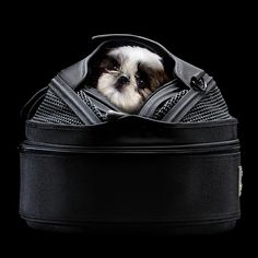 Sleepypod is an innovative mobile pet bed that is an everyday bed, convenient carrier, and safe car seat – all in one.