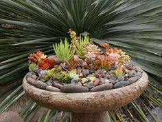 Indoor And Outdoor Succulent Garden Ideas. Old bird bath is great to grow Succulents, add some rocks to add interest. So many plants and colors to chose from. I pin the things I love!!