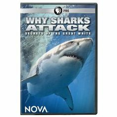 Nova: Why Sharks Attack http://encore.greenvillelibrary.org/iii/encore/record/C__Rb1377301