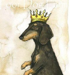 Dachshund King