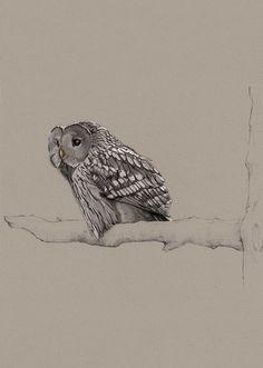Birds Illustrations by Janja Baznik, via Behance owl art, bird draw, bird illustr