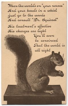 Dr. Squirrel - Nuttin' wrong.  Everything's all right! Rebecca Acosta
