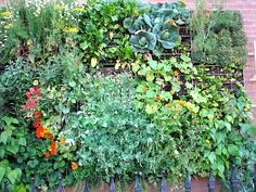 Great vertical gardening 'how to' wall mount.