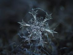 Stunning Macro Details of Uniquely Beautiful Snowflakes - My Modern Metropolis