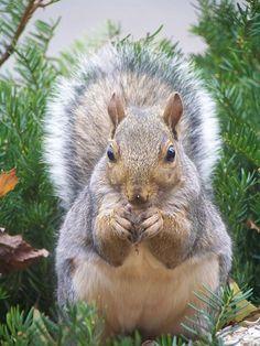 hello, squirrel