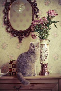finhabastos:  © Galina Alexandrova.