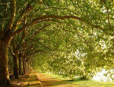 A walk along the river in Lisbon, Portugal. 5portugalund inseln, walks, tree, dream place, beauti, travel, lisbon, rivers, river walk