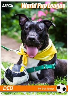 Adorable Deb is a one year old Pit Bull who loves peopole! Visit this album to see more photos of her: https://www.facebook.com/media/set/?set=a.10152202943861139.1073741881.7191206138&type=3