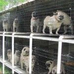 Money talks in the fight for puppy mills - big money trade groups fight pet store bans...Ka-Ching, Ka-Ching.
