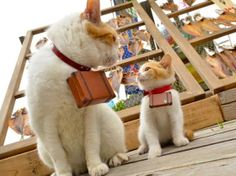 In Japan, two adorable kitties are taking their visitors on the cutest tour ever in Japan.  Nyalan and Deshi are the mascots for Jalan, a Ja...
