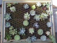 HOW TO: vertical succulent garden