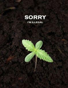 #Marijuana egnilk66  #Marijuana  #Marijuana