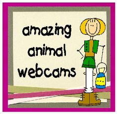 Oodles of Animal Webcams...All live. Plus free animal observation printables!  livebinders.com/p...