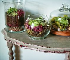 Today's project: How to Make a terrarium, DIY @savedbyloves. Indoor plants, succulent.