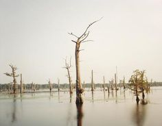 Cypress Swamp, Alligator Bayou (1998) Richard Misrach
