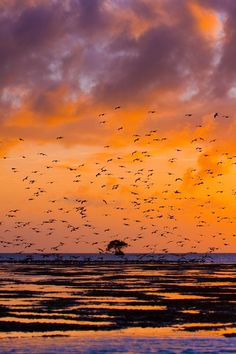 Birds in flight over the waters of Everglades National Park