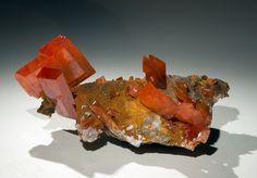 Wulfenite Red Cloud Locality: Red Cloud Mine, Yuma County, Arizona Size: Specimen is 2.0 inches long.. Stan Celestian