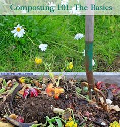 Composting – The Basics
