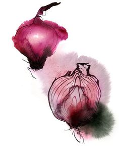 red onions watercolor by Christina Drejenstam