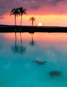 Sea Turtle Sunset, Tobago Cays, The Grenadines - too perfect... :)