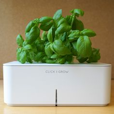 Click and Grow Starter Kit