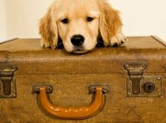 Pet Friendly Vacation Destinations #FlemingsMayfair #GreenPark