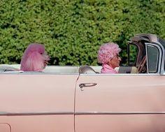 pink pink pink, beverly hills, make money, dogs, pink poodl, red hats, irises, poodles, blues