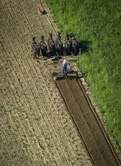 Amish Farmer, New Wilmington PA - Jeff Swensen