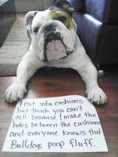 """""""Everyone knows Bulldogs poop fluff"""" hahaha dog shaming is hilarious"""