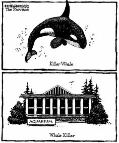 the truth. #SeaWorld #whales #dolphins #orcas #killerwhales #oceanicconservation #captive #voiceless