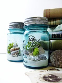 neat way to save things you've gathered on a trip - Mason Jar Terrarium Moss Seashells and Lichens  by DoodleBirdie, $42.00