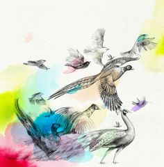 Elisabeth Moch - Birds