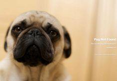 """""""Pug not found."""" http://spotwag.com/404"""