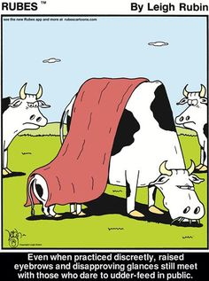 Udderly ridiculous...don't be cowed!