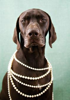 everyone can wear pearls wear pearl, pearls, dog