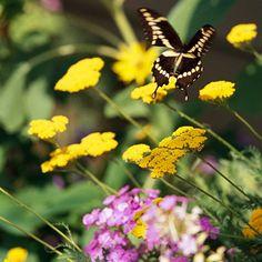 A beautiful garden to attract butterflies.