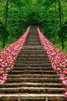 modern gardens, pathway, stairway, heaven, tulip, garden design ideas, place, modern garden design, flower