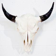 Fab.com | Sun Bleached Bison Skull