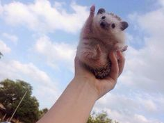 Hedgehog Expresses Exactly How We Feel About Fridays