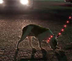Light Up Dog Leashes: Walk your dog at night safely and stylishly with these light up dog leashes. With countless design styles, you will be visible to oncoming traffic in a variety of light colors that you can select to either emit a flashing or steady glow onto the dog leash.
