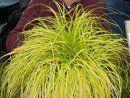 Carex Everillo EverColor® - New Ornamental Grass thrives in shade.