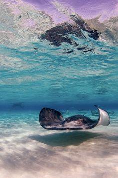 Under de sea