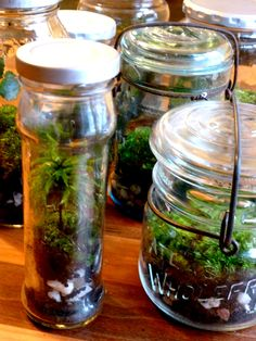 vintage mason jar terrariums