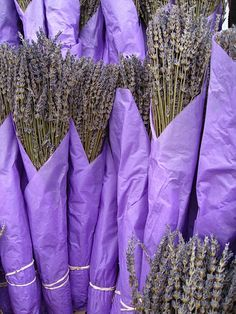 Wrapped bunches of lavender x