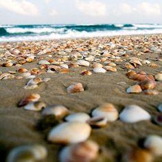 sand, shore...beach