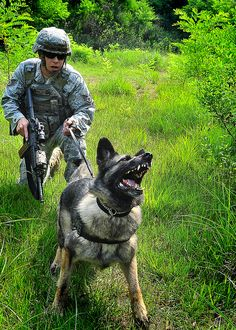 Military working dog.