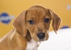 Do You Know Your Puppy Bowl Players?