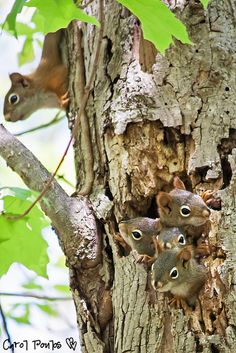 Ready for the World tree, famili, place, squirrel