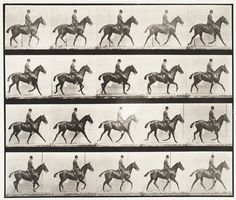 "Eadweard Muybridge, ""Daisy with Rider"" (1887)   photograph   collotype    Source: http://www.sfmoma.org/explore/collection/artwork/29236#ixzz1jCDAnrv3   San Francisco Museum of Modern Art"