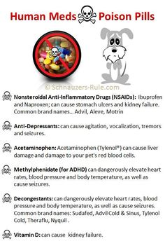 Human medications that should never be given to dogs. Ingestion can cause tremors, seizures, liver damage, kidney damage or death in dogs via Schnauzers-Rule.com